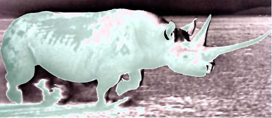 rhinos florence