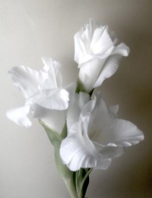 la flor que nació cuando tu te ibas